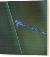A Vivid Dancer Dragonfly Wood Print