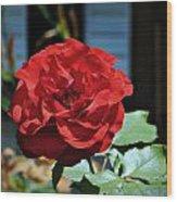 A Vivid Red Rose Wood Print