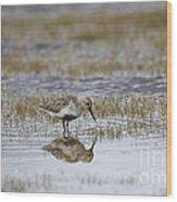 A Wading Dunlin Wood Print