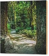 Pathway Cathedral Grove Wood Print