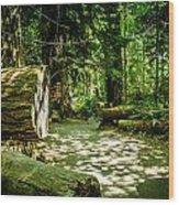A Walk Among The Giants Collection 3 Wood Print