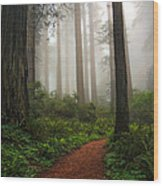 A Walk In The Fog Wood Print