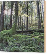 A Walk In The Forest Wood Print