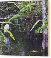 A Walk In The Glades Wood Print