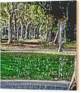 A Walk In The Park By Diana Sainz Wood Print