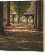 A Walk In The Park Wood Print by Cindy Rubin