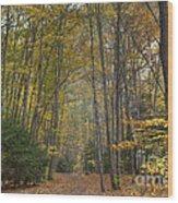 A Walk In The Woods II Wood Print