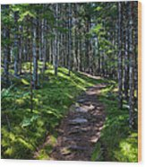 A Walk In The Woods Wood Print
