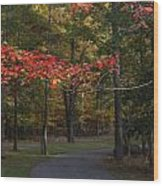 A Walk Through Fancher Davidge Park Wood Print