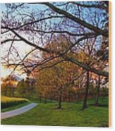 A Walk Through The Canola Fields At Sunset Wood Print