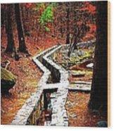A Walk Through The Woods Wood Print