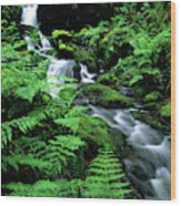 A Waterfall In Redwood National Park Wood Print