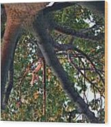 A Web Of Branches Wood Print by Kiros Berhane