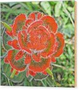 A West Coast Flower Wood Print