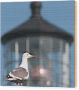 A Western Gull  Larus Occidentalis Wood Print