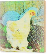 A Wet Hen In Its Own Little Paradise  Wood Print
