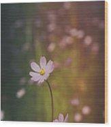 A Whisper Of Pink  Wood Print