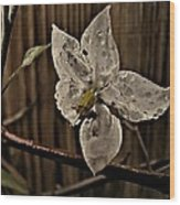 A White Flower And Dew Drops Wood Print