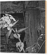 A White Flower With An Old Fence Wood Print