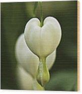 A White Heart Wood Print