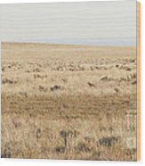 A White Mustang Feeds On Dry Grass Fields Of Arizona Wood Print