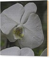 A White Orchid Flower Inside The National Orchid Wood Print