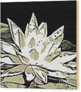 A  White Water Lily Wood Print
