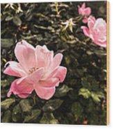 A Wild Rose Wood Print