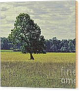 A Wind Blown Tree On The Prairie Wood Print