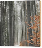 A Winters Path Wood Print by Bill Wakeley