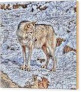 A Wolf In Winter Wood Print by Skye Ryan-Evans