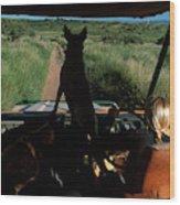 A Woman Sits In Her Safari Jeep Wood Print