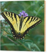A Yellow Butterfly Wood Print