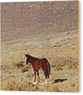 A Young Mustang Wood Print