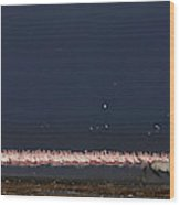 A Zebra Running On The Shores Of Lake Wood Print