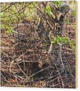 Abandoned Bench Wood Print