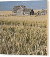 Abandoned Farmhouse In Wheat Field Wood Print