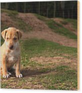 Abandoned Puppy Wood Print