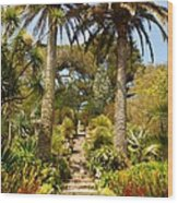 Abbey Gardens Of Tresco On The Isles Of Scilly Wood Print