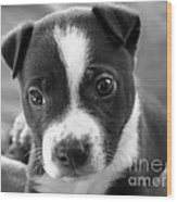 Abby The Rescued Dog Wood Print by Deborah Fay