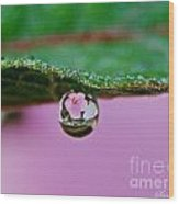 Abiscus Dew Reflection Wood Print