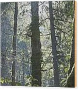 Above The Firs Wood Print
