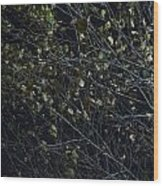 Abstract Background Of Tree At Night Wood Print