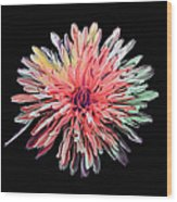 Abstract Chrysanthemum Wood Print