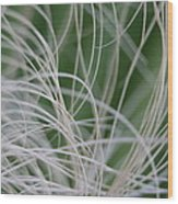 Abstract Image Of Tropical Green Palm Leaves  Wood Print