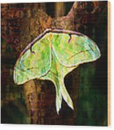 Abstract Luna Moth Painterly Wood Print