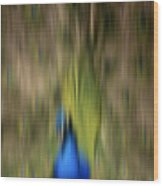 Abstract Moving Peacock  Wood Print by Georgeta Blanaru
