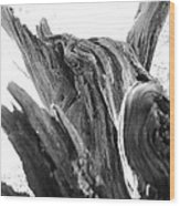 Abstract Of A Fallen Tree Root Wood Print