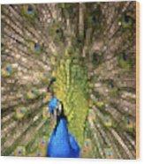 Abstract Peacock Digital Artwork Wood Print