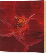 Abstract Red Rose 1a Wood Print